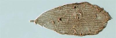 Ανακαλύφθηκαν απολιθώματα πεταλούδων 200 εκατ. ετών