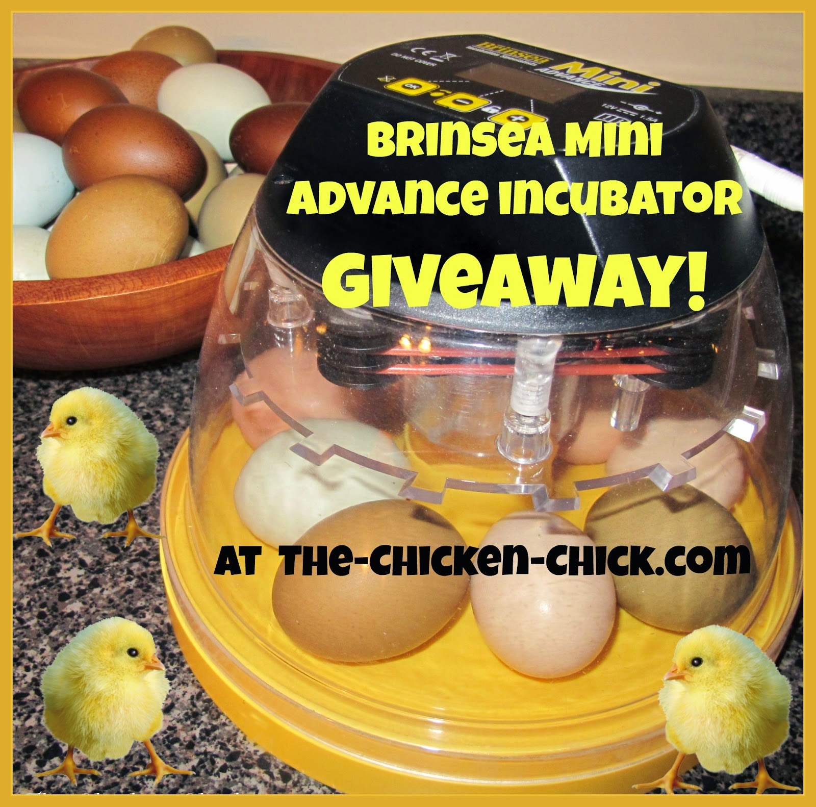 Brinsea Mini Advance Incubator Giveaway at The Chicken Chick®