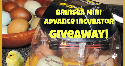 Brinsea INCUBATOR GIVEAWAY at Clever Chicks Blog Hop #223!