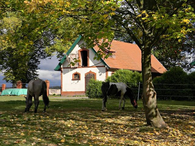 W stajni pałacowej w Wąsowie są konie.