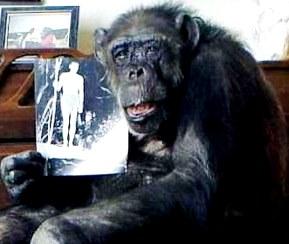 Foto de la mona Chita con el retrato de su amigo Tarzán