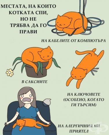 Местата, на които, котката спи, но не трябва да го прави.. - на камелите от компютъра, в саксиите, на ключовете (особено, когато ги търсим), на алергичния ни приятел!