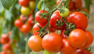 Pomodori.