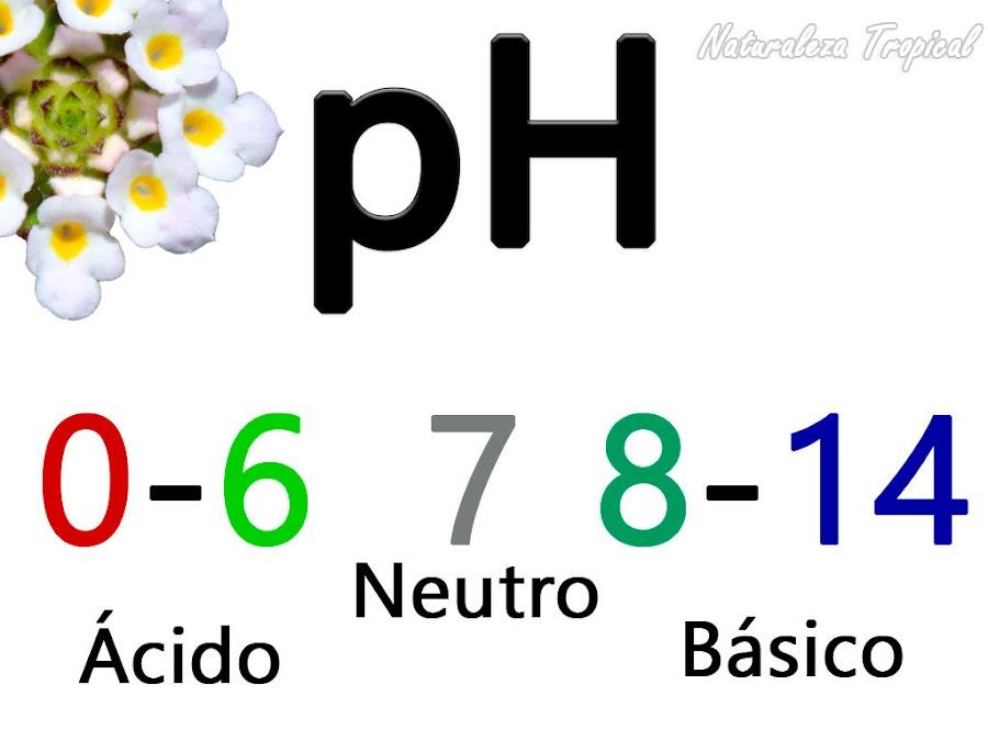Efectos de la variación del pH del sustrato en la salud de las plantas. Importancia de la evaluación de esta medida en el sustrato del jardín.