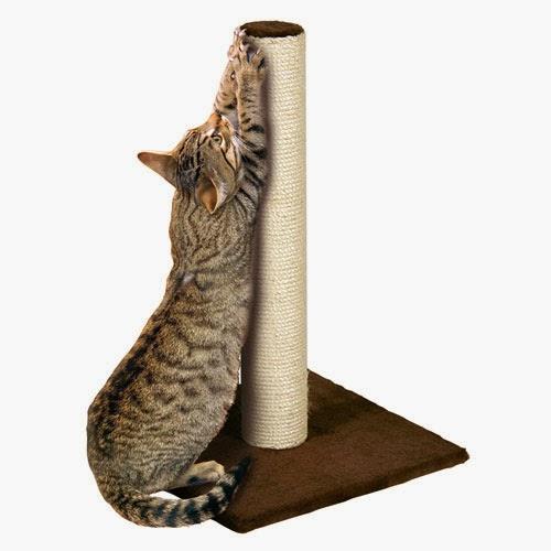 Apa Harus Dipersiapkan Saat Pertama Kali Mengadopsi Kucing Plus Tips Edisi Hemat Perlengkapan Kucing Radiokucing Com