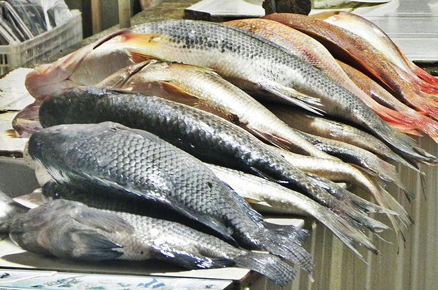 Distribuição de peixes vai beneficiar mais de 2 mil familiares carentes de Delmiro Gouveia