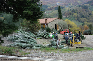 Men with Christmas Trees harvested in Castelvecchio in Tuscany