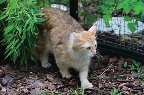 cat in outdoor enclosure