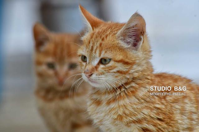 Η φωτογραφία της ημέρας: Οι παιχνιδιάρες γατούλες
