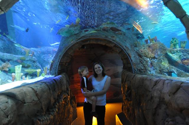 Aquarium Kc Kansas City Mo Sea Life Aquarium And