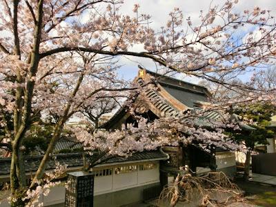 龍口寺の桜