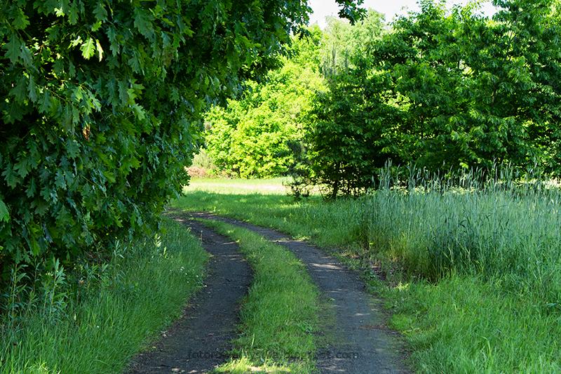 droga do Borków Nizińskich