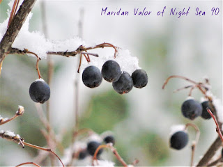 A Few Of My Favorite Things; Random Pictures, snow covered berries