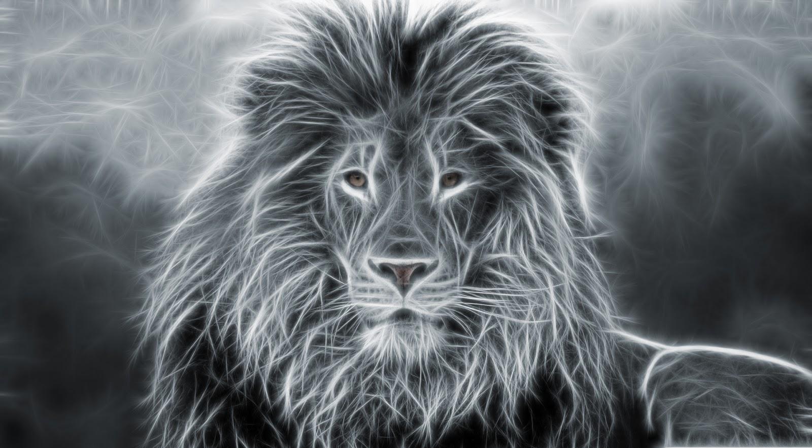 Animals Wallpapers, Animals Top Wallpapers, خلفيات طيور, خلفيات حيوانات, صور حيوانات, الحيوانات, Beautiful And Amazing Animals