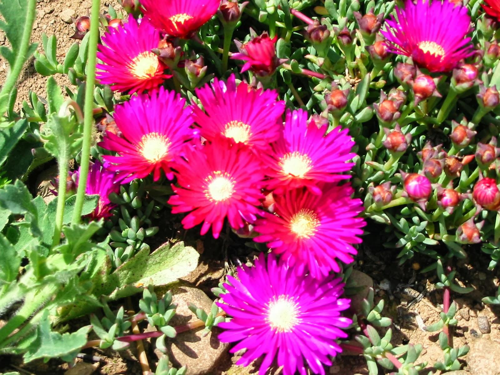 Plantas e flores - Planta de exterior resistente ...