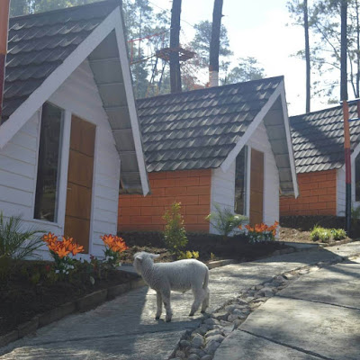 glamping di the lawu park