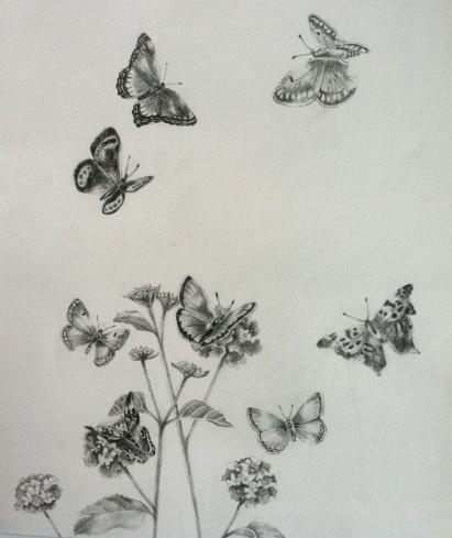 Butterflies with flowers pencil drawing