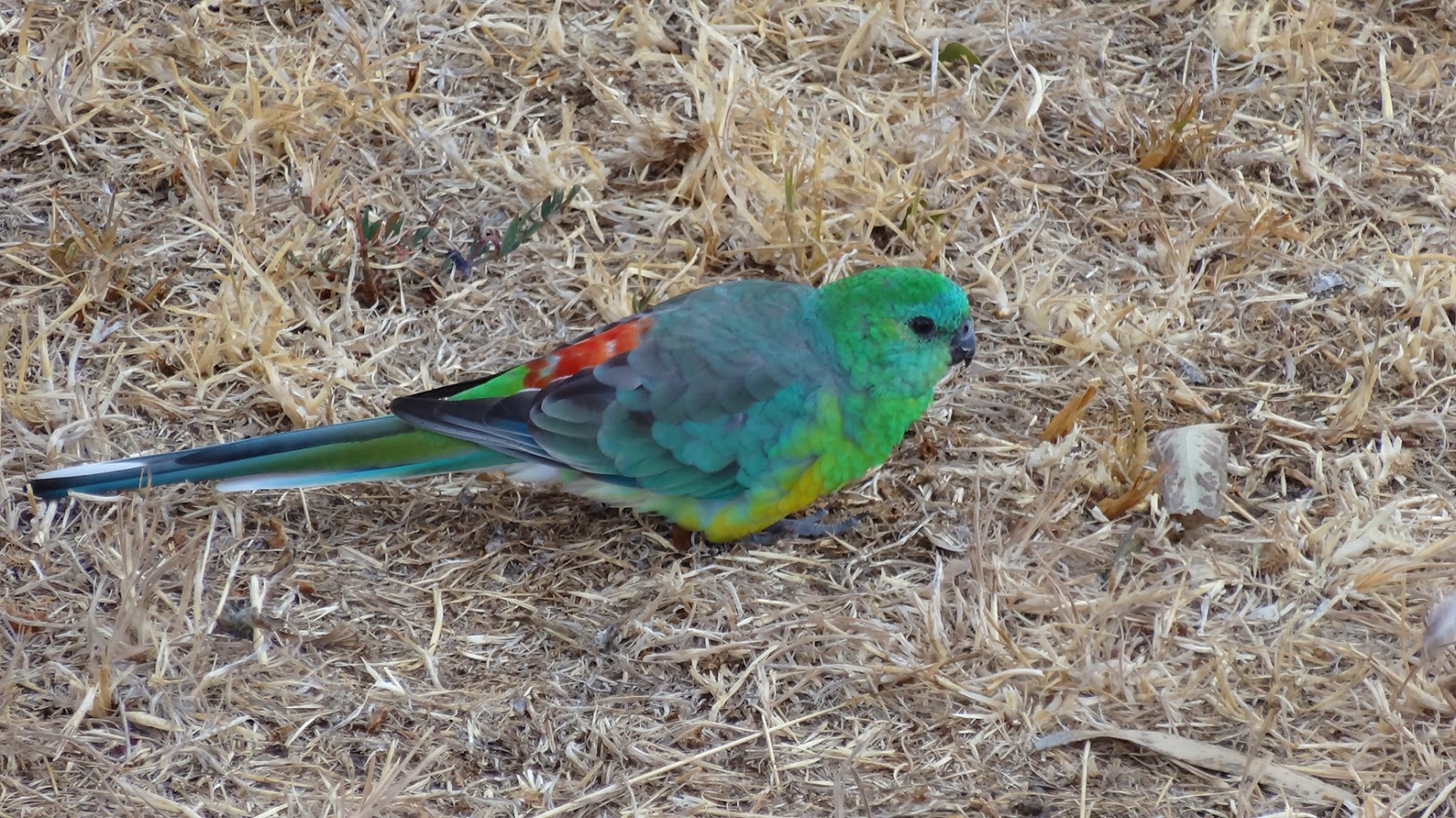 Backyard Bird Identification (IDENTIFY YOUR VISITORS)