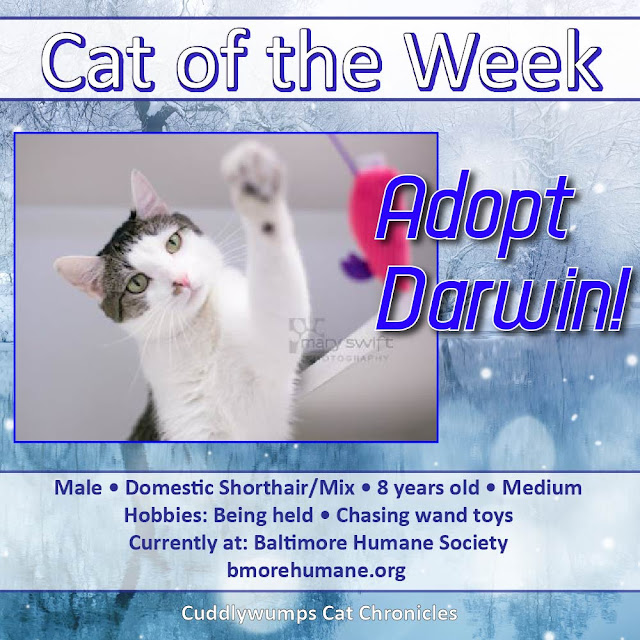 Cat of the Week: Adopt Darwin!