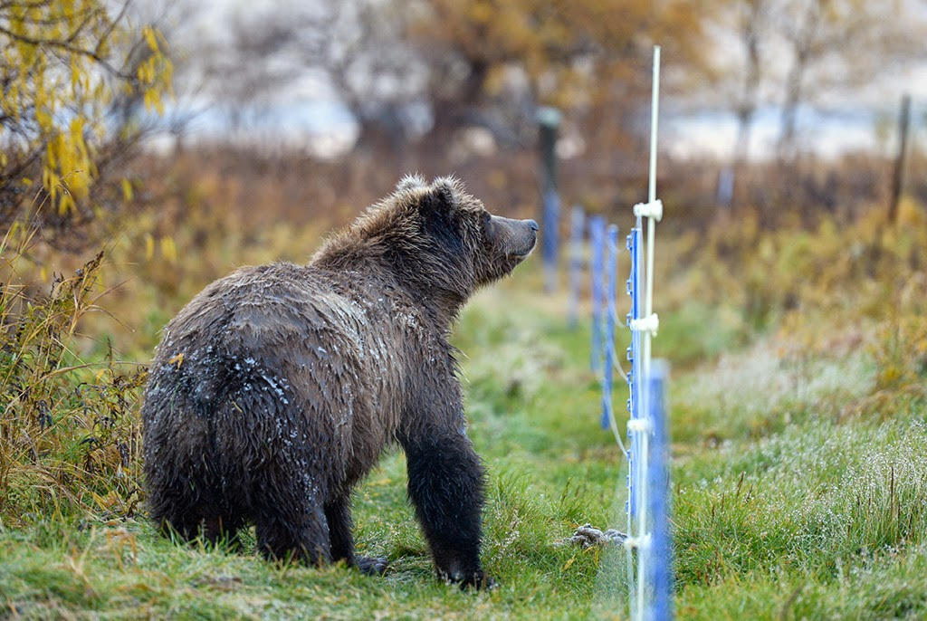 Electric Fence Electric Fence Groundhog