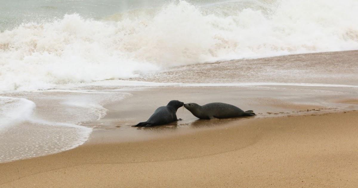 Seal Beach Ocean Swim
