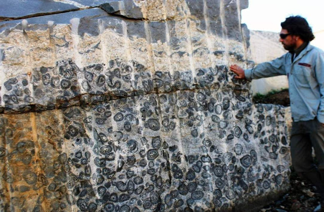 Orbicular granite cut by a co-magmatic intrusion of granite and fine-grained diorite.