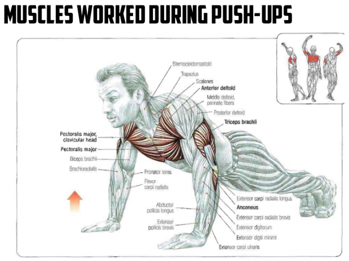 Muscle Building Workouts at Home! - all-bodybuilding.com