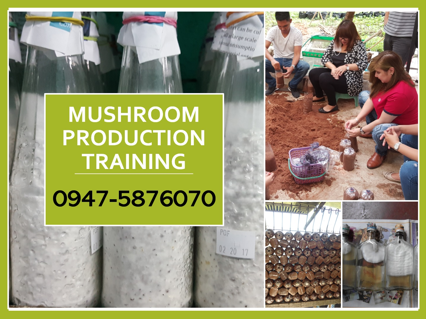 JMP Mushroom: Mushroom Production and Growing Seminar