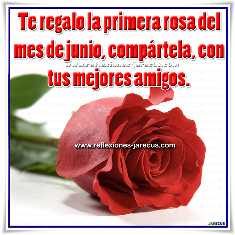 Feliz mes de junio, Mes de junio, Rosa, amigos