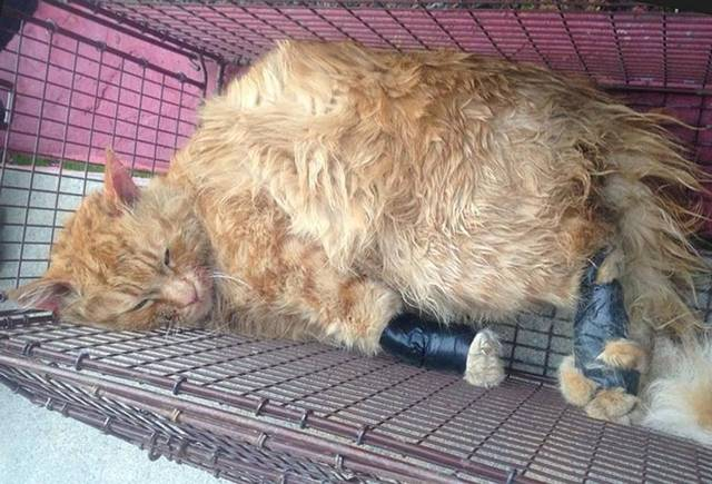 इलाज के दौरान हुई बिल्ली की मौत, डॉक्टर पर ठोंका 2.5 करोड़ रुपए का मुकदमा