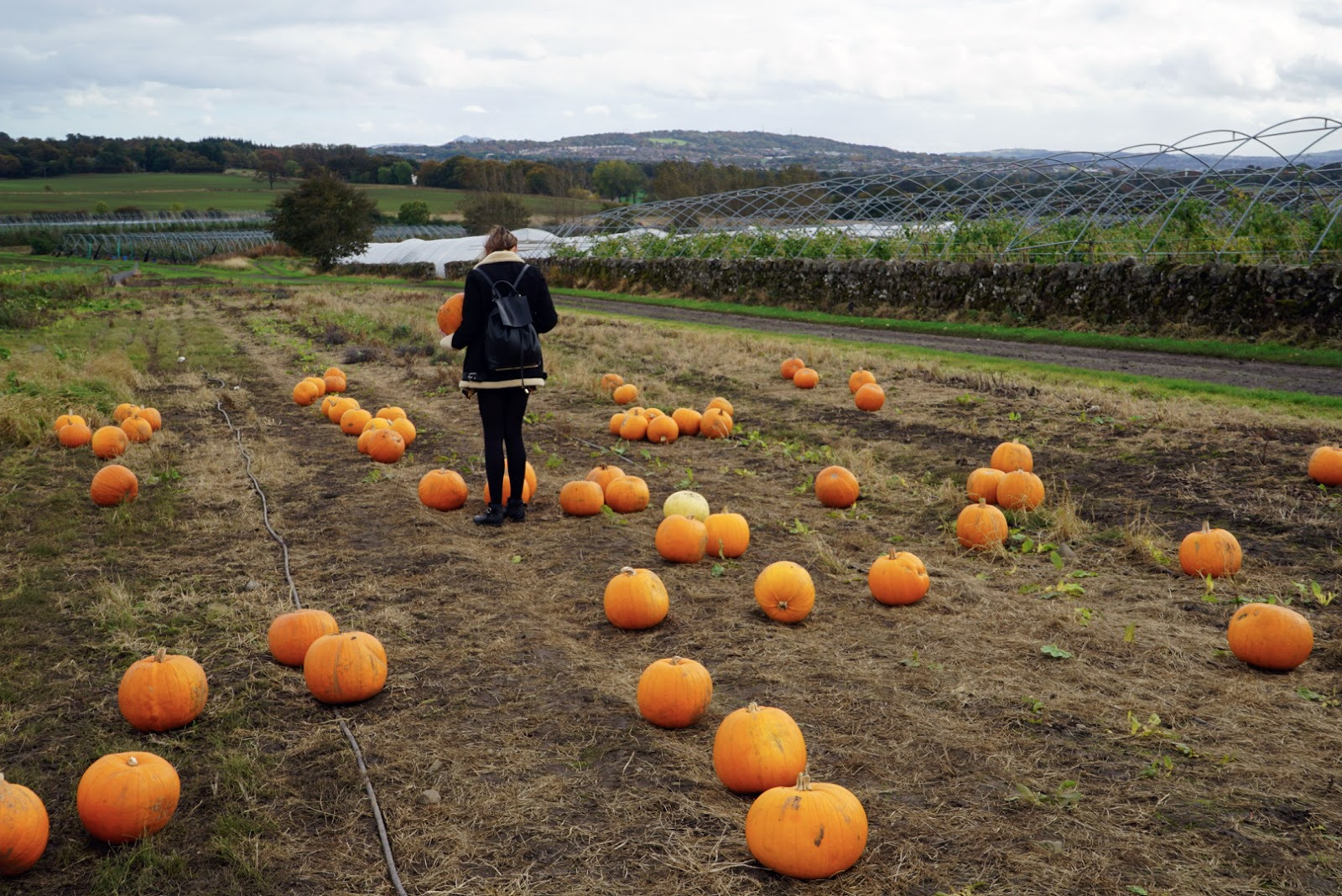 Pumpkin Picking at Craigies Farm, Edinburgh, Scotland // Autumn // Lauren Rose Fashion Lifestyle Blogger