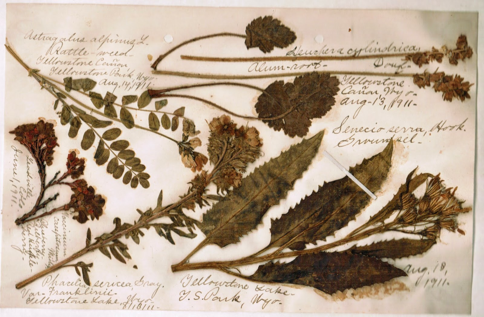 Image result for herbarium