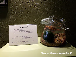 Something Perfect gift shop; see more on my blog. This is MoMo who lives at Something Perfect. He's a marimo moss ball.