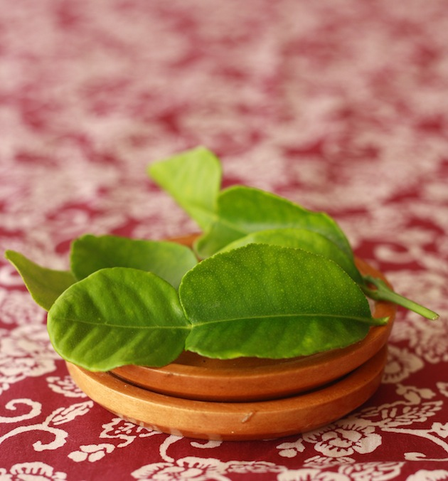 fresh kaffir lime leaves from tree for asian cooking with spices and herbs