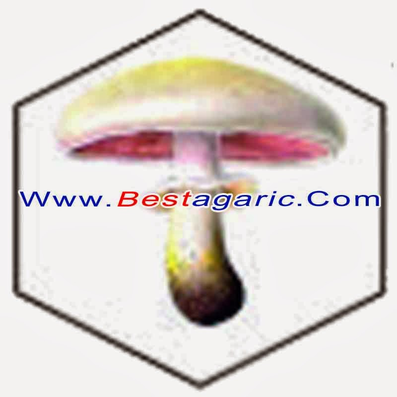 manfaat-jamur, khasiat-jamur, guna-jamur, untuk-kesehatan, penyembuhan-dengan-jamur, terapi-jamur