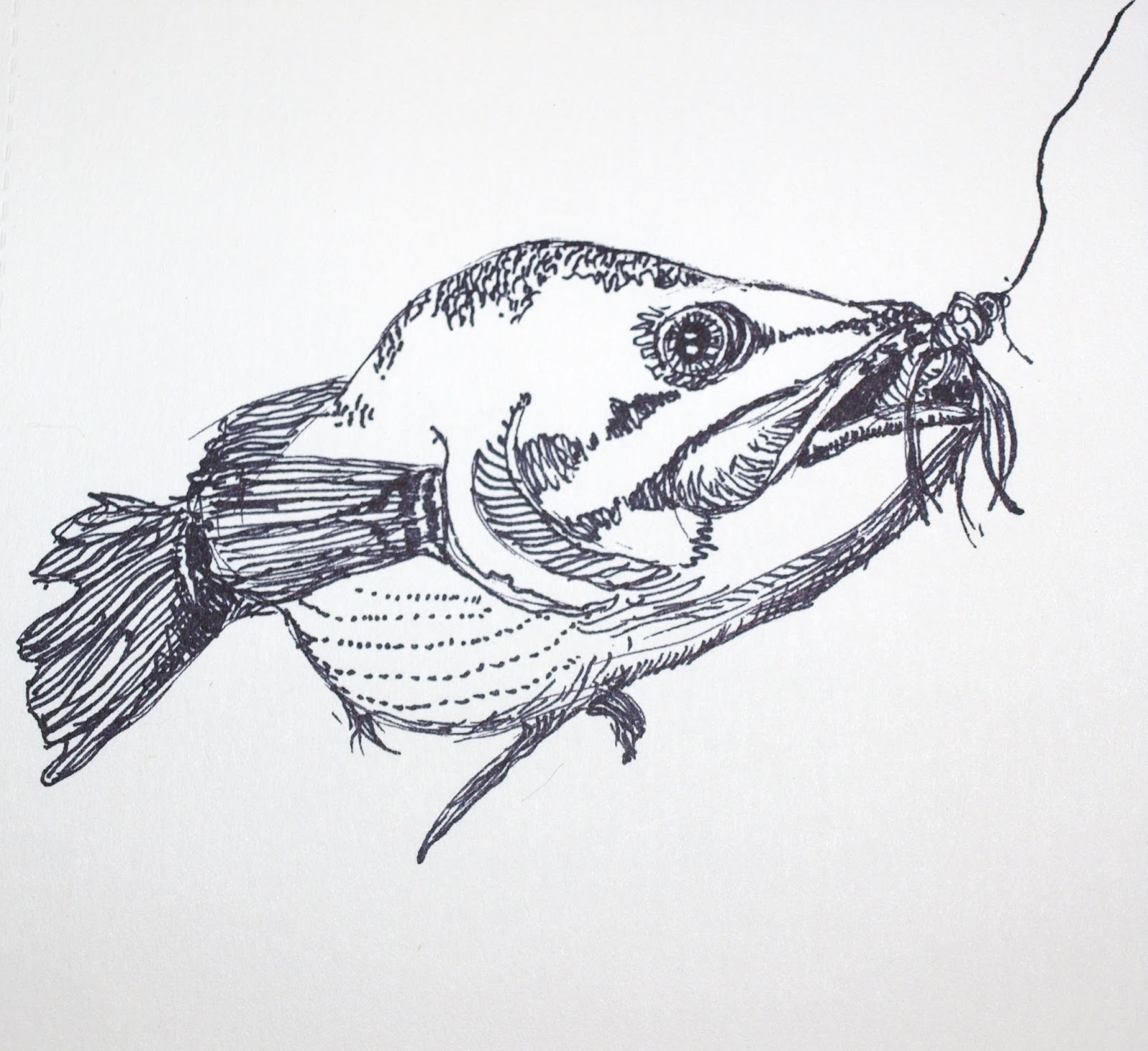 This is an image of Nerdy Realistic Fish Drawing