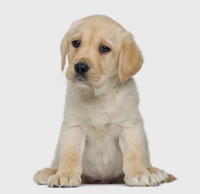 Łysienie psa