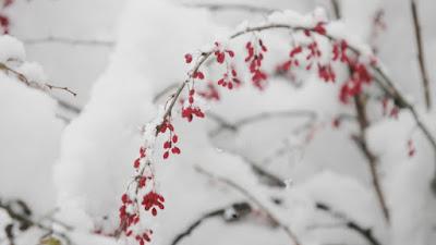Най-ниските температури през декември ще бъдат между минус 15 и минус 10 градуса
