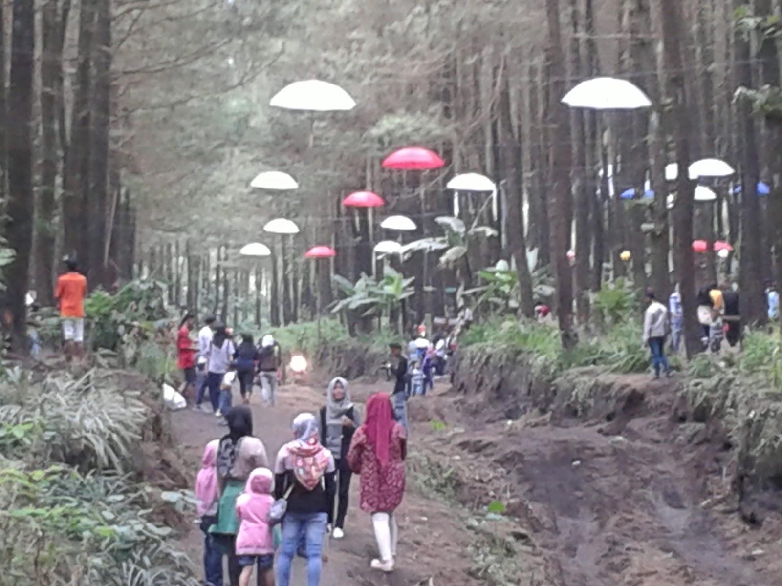 saat ini wisata hps masih dalam tarap pengembangan namun demikian sudah dapat dinikmati pemandangan pinus dengan asesori payung yang digantung diberbagai