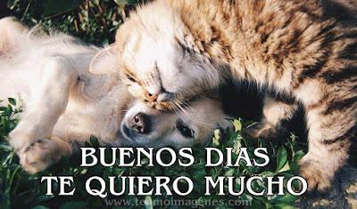 imágenes de perritos y gatitos para desear BUENOS DÍAS para whatsapp