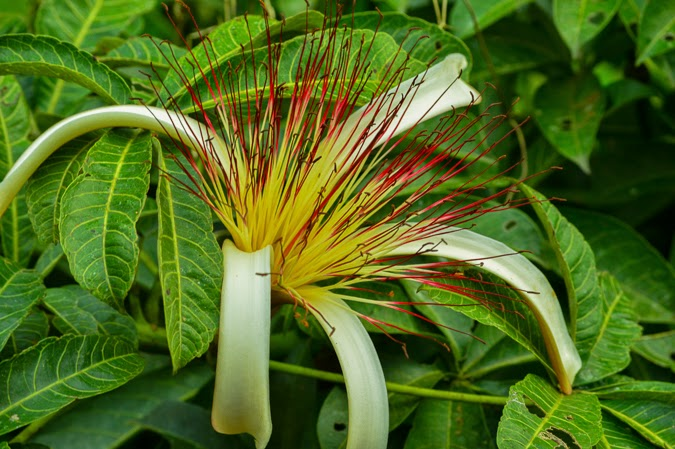 Fauna in Tortuguero, Costa Rica