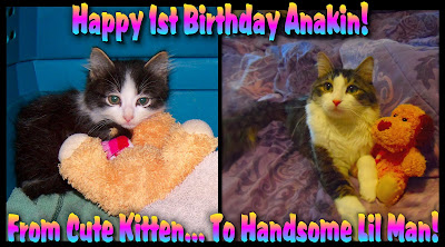 Anakin The Two Legged Cat's First Birthday