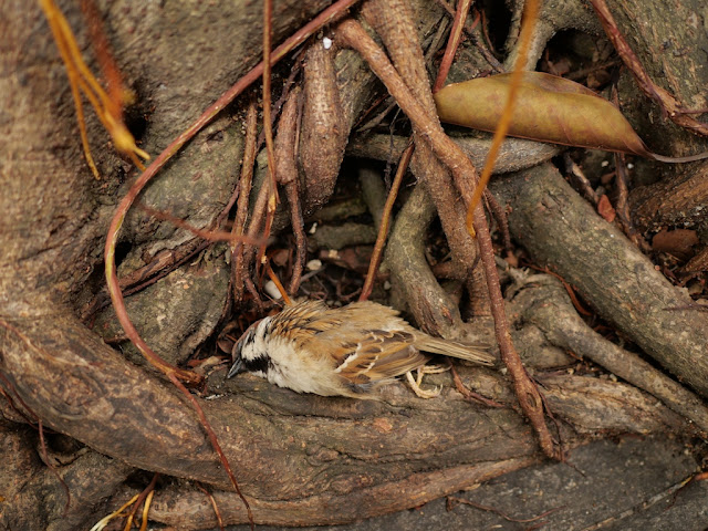 dead sparrow next to a tree