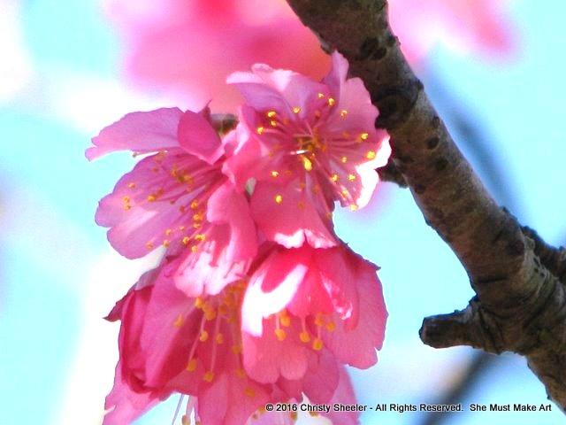 Cherry blossoms photograph by L. McMahon