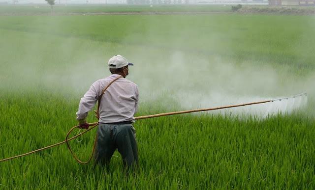 Pengertian Pestisida, jenis Pestisida serta Dampak Positif dan Negatif Penggunaan Pestisida