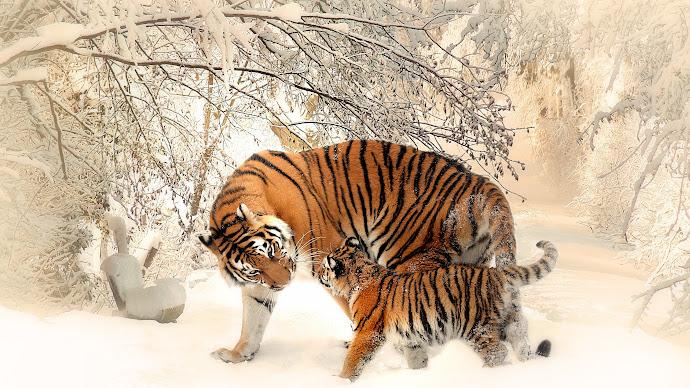 Wallpaper: Tiger Mom and Tiger Cub