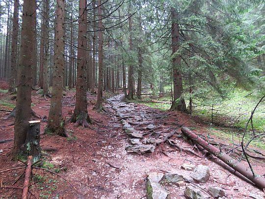 Droga na Przełęcz w Grzybowcu.