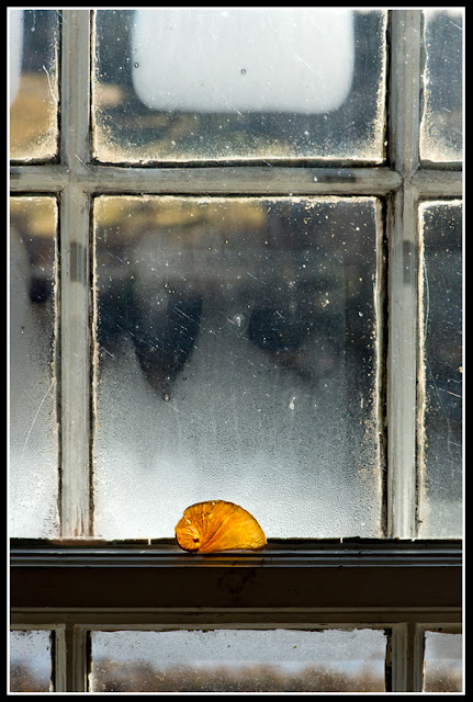 Nova Scotia; Maritimes; Window; Shell