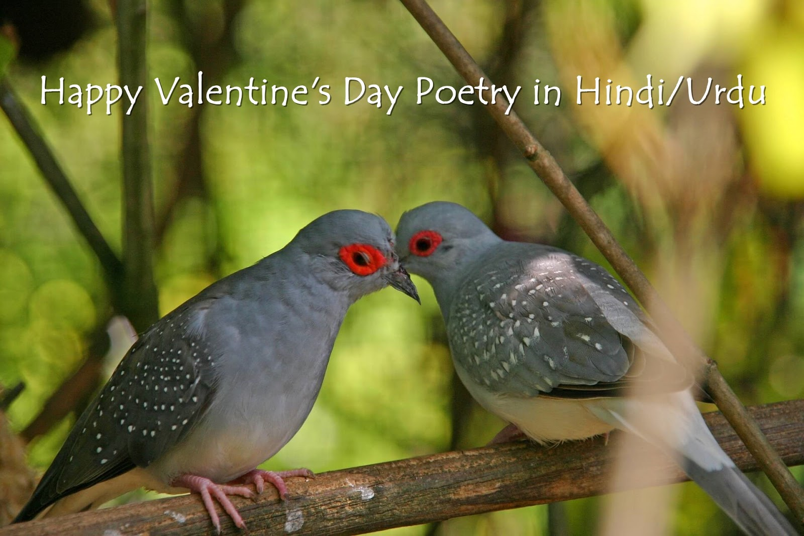 Valentines Day SMS Quotes Shayari Messages in Hindi & Urdu