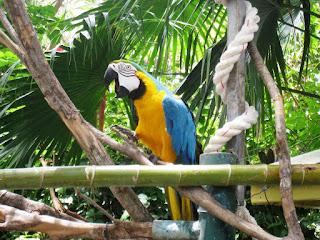 Au village des perroquets